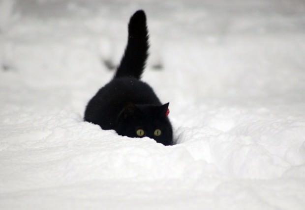 Смешные картинки животных - Выпуск № 48 (Коты в снегу)