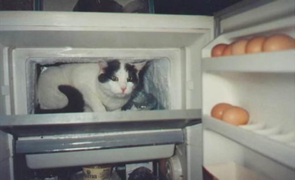 очень жарко в квартире чем помочь коту слова