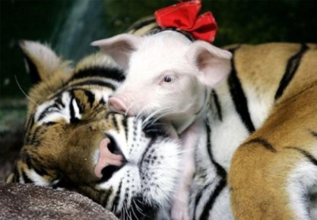 Приемные родители животного мира