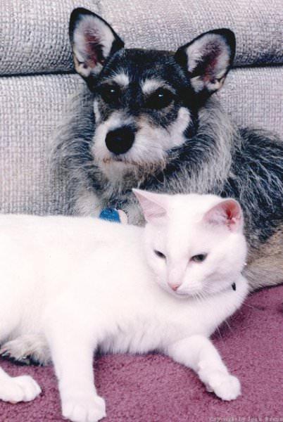 Джинни - собака, спасающая кошек (Ginny)