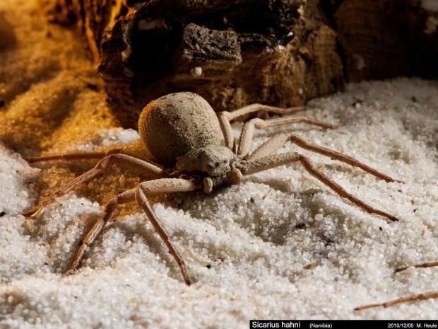 яйца пауков фото