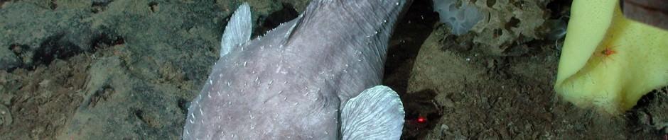 Обыкновенная пиранья (лат. Pygocentrus nattereri)