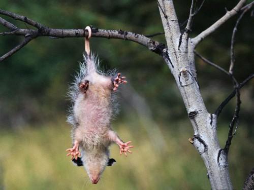 Смешные картинки животных - Выпуск № 3