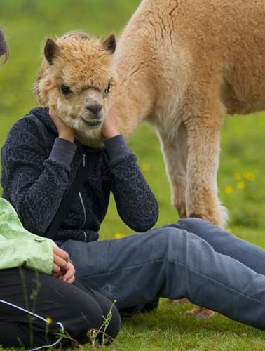 Смешные картинки животных - Выпуск № 2