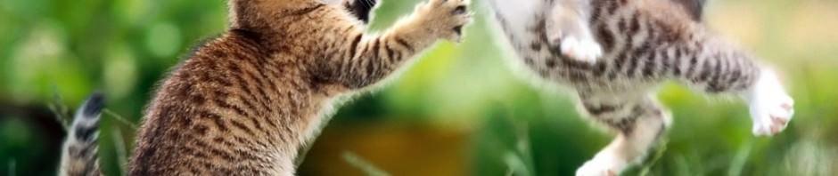 Смешные картинки животных — Выпуск № 2
