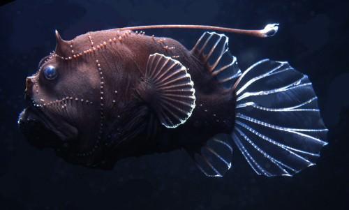 Глубоководный удильщик (лат. Ceratioidei) (англ. Angler fish)