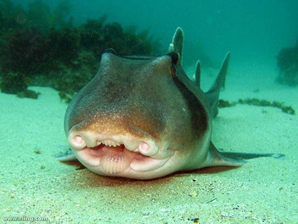 видео обои акула