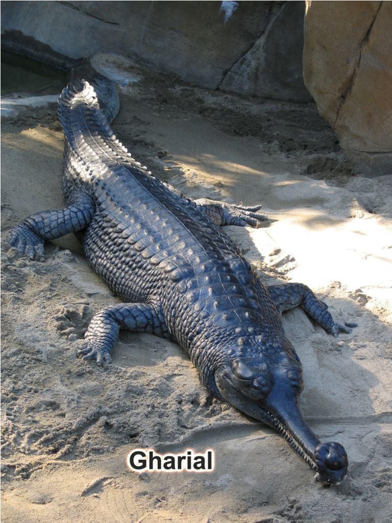 Фотографии крокодилов