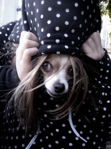 Смешные картинки животных – Выпуск № 5 (Собаки)