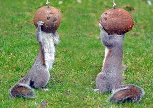 Смешные картинки животных - Выпуск № 6 (Грызуны)