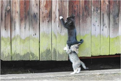 Смешные картинки животных - Выпуск № 4