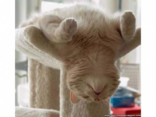 Сонное кошачье царство