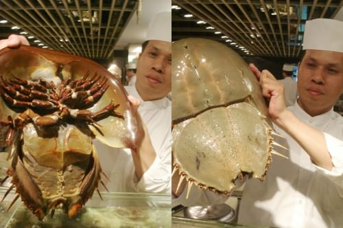Мечехвост или «краб-подковка» (лат. Xiphosura) (англ. Horseshoe crab)