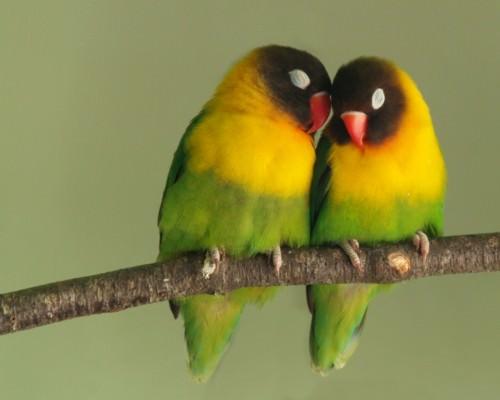 Смешные картинки животных - Выпуск № 11 (Птицы)