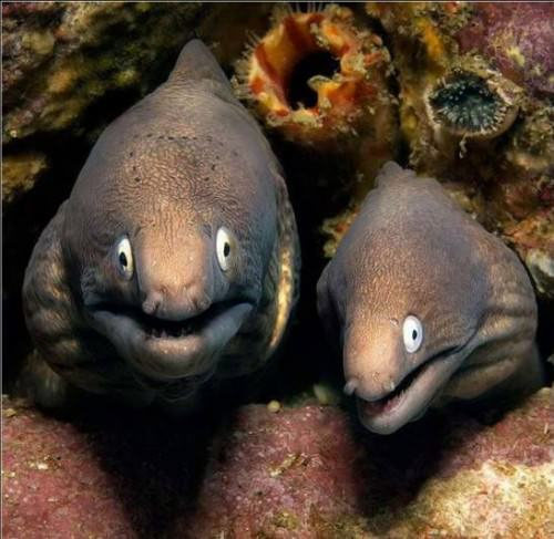 Смешные картинки животных - Выпуск № 10 (Рыбы)
