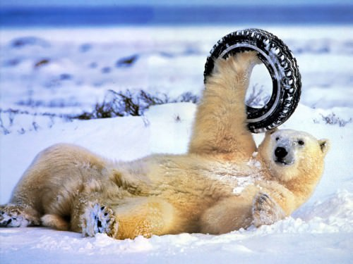 Смешные картинки животных  - Выпуск № 8 (Медведи)