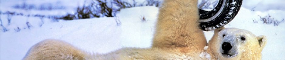 Смешные картинки животных — Выпуск № 8 (Медведи)
