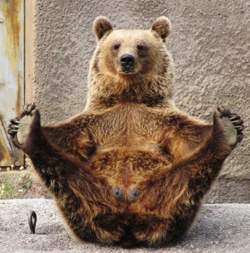 Смешные картинки животных – Выпуск № 8 (Медведи)