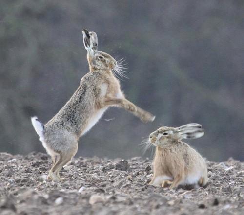 Смешные картинки животных - Выпуск № 9 (Кролики и зайцы)
