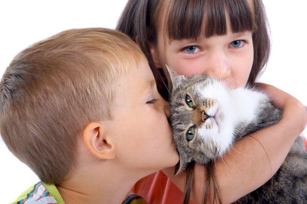 Коты и кошки самые смешные фото