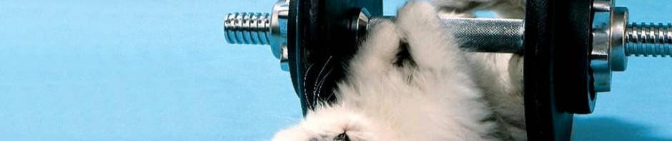 Смешные картинки животных — Выпуск № 14 (Животные и спорт)
