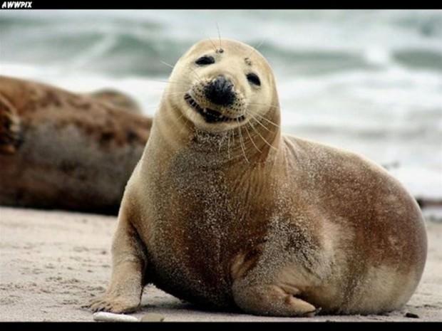 Смешные картинки животных - Выпуск № 16 (Улыбки животных)