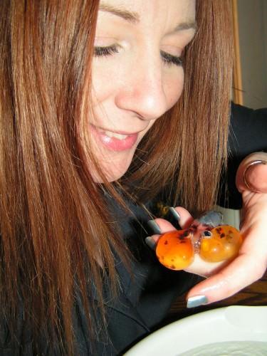 Золотая рыбка «Водяные глазки» (лат. Carassius auratus) (англ. Bubble eye goldfish)