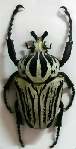 Жук-голиаф (лат. Goliathus) (англ. Goliath beetle)