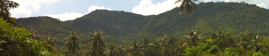 Звуки леса Таиланда