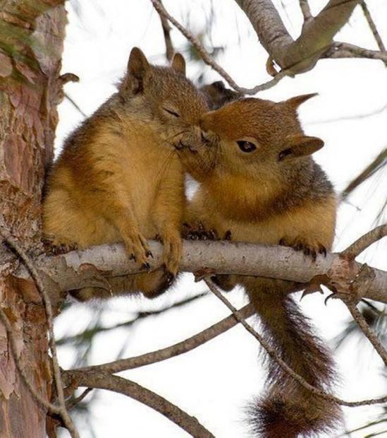 Смешные картинки животных - Выпуск № 18 (День всех влюбленных)