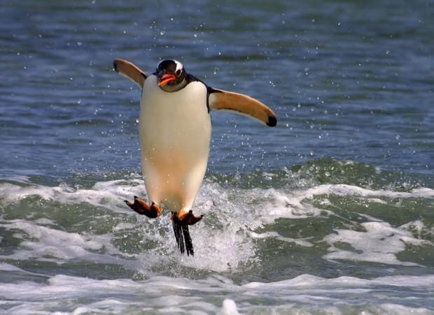 Смешные картинки животных - Выпуск № 19 (Летающие нелетающие)