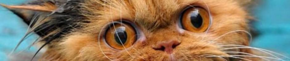 Смешные картинки животных — Выпуск № 20 (Мокрые коты)