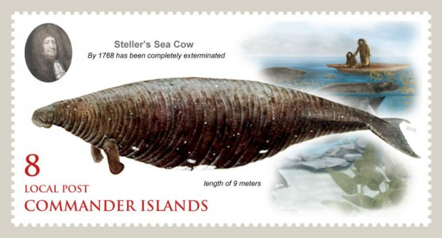 Стеллерова корова или морская корова (лат. Hydrodamalis gigas)(англ. Steller's sea cow)