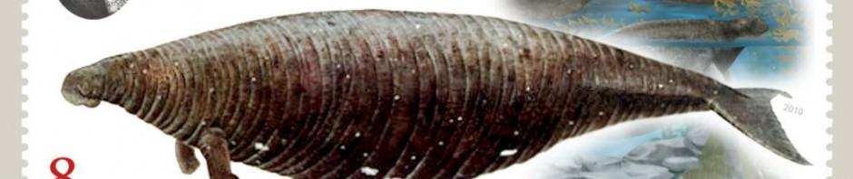 Стеллерова корова или морская корова (лат. Hydrodamalis gigas)