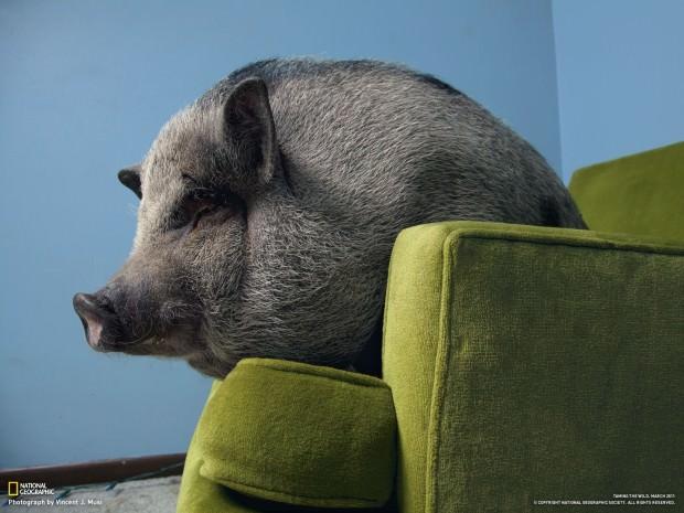 """Обои для рабочего стола - """" В мире животных"""" № 16"""