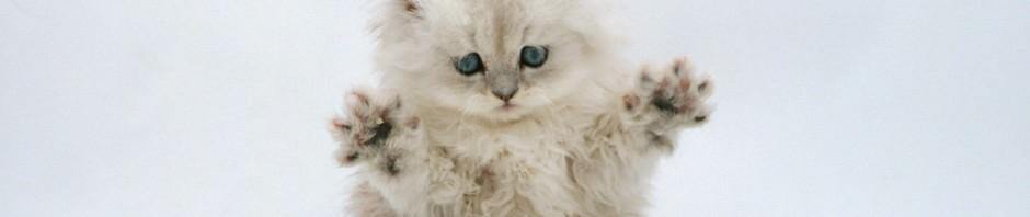 Смешные картинки животных - Выпуск № 21 (Котята)