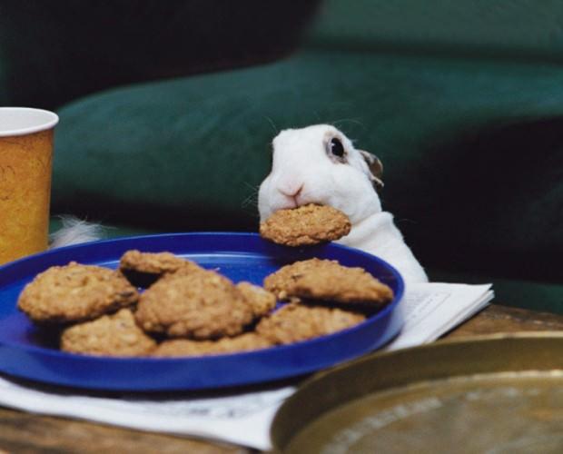 Смешные картинки животных - Выпуск № 22 (Животные-воришки)