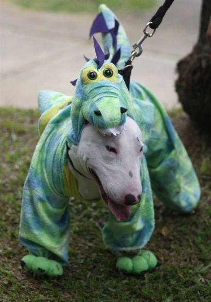 Смешные картинки животных - Выпуск № 23 (Животные в костюмах)
