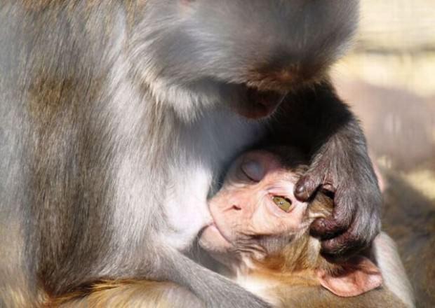 Смешные картинки животных - Выпуск № 24 (Просто улыбнуло)