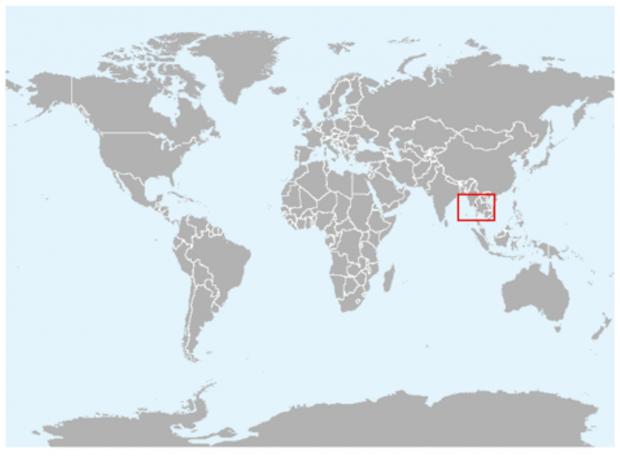 Свиноносая летучая мышь или мышь-шмель (лат. Craseonycteris thonglongyai) (англ. Kitti's Hog-nosed Bat or Bumblebee Bat)