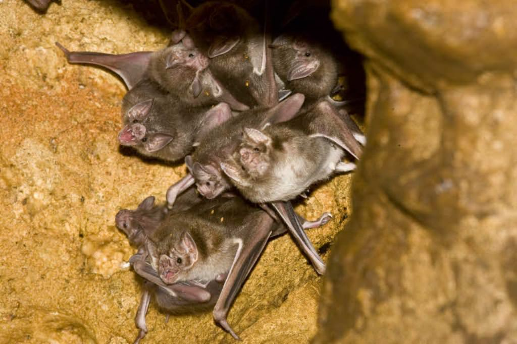 reciprocal altruism in vampire bats essay I've got a new article in the new yorker this week about the persistent paradox of altruism it's subscription only, but here's the beginning: the vampire bat emerges from its cave at the darkest.