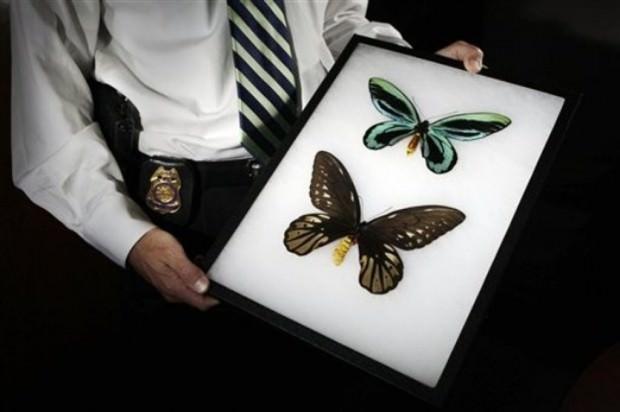 Самые крупные в мире бабочки