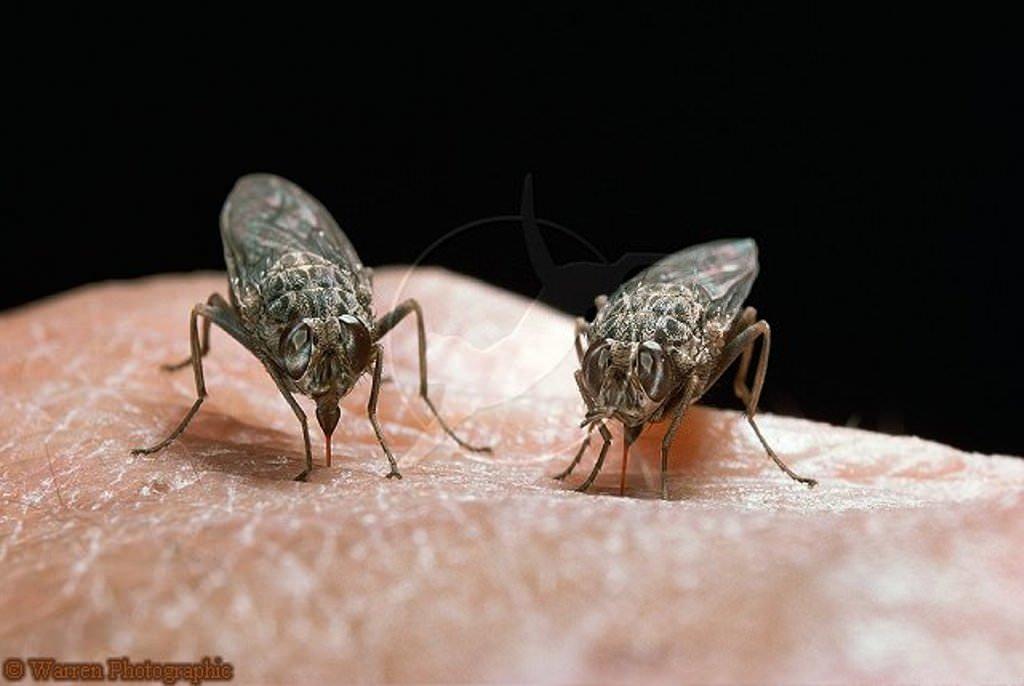 как появляются паразиты в человеке