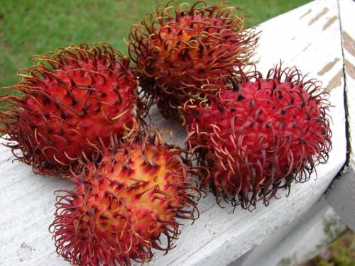Рамбутан (лат. Nephelium lappaceum) (англ. Rambutan)