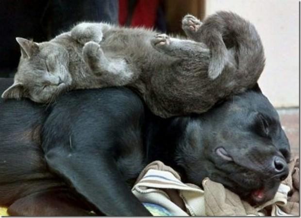 Смешные картинки животных - Выпуск № 25 (Спящие животные)