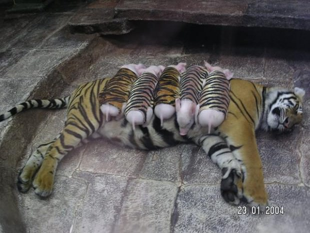 Смешные картинки животных - Выпуск № 26 (Животные в зоопарке)