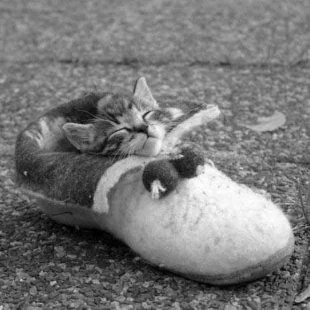 Смешные картинки животных - Выпуск № 27 (Коты в сапогах)