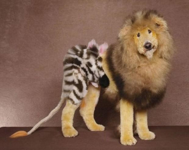 Смешные картинки животных - Выпуск № 29 (Прически животных)