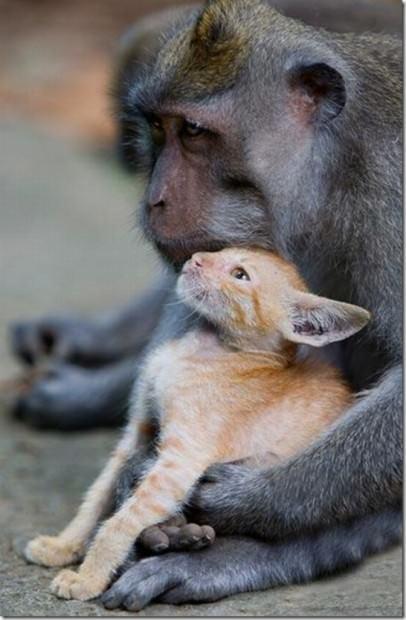 Смешные картинки животных - Выпуск № 31 (Друзья навеки)