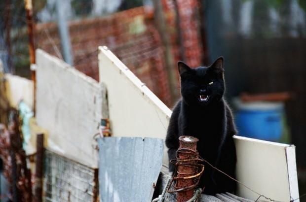 Смешные картинки животных - Выпуск № 34 (Черные коты)